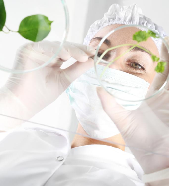 Recherche cosmétologie laboratoires phytogénèse